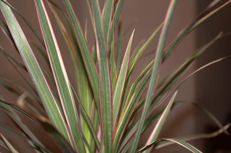 plant2