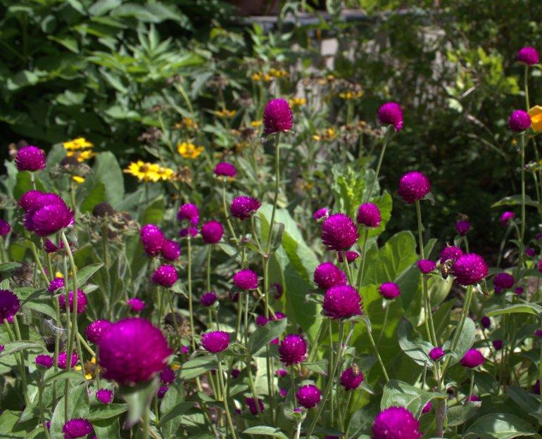 BotanicGarden21