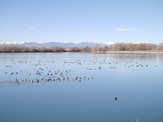 Look at all those birds! I couldn't even get them all in one picture (never figured out the panorama)