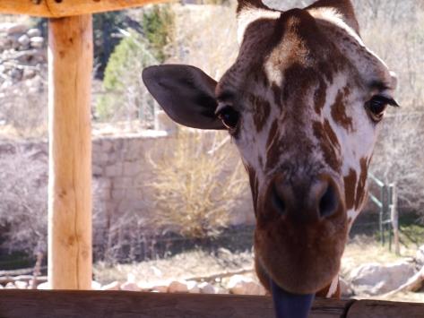 048 Cheyenne Zoo