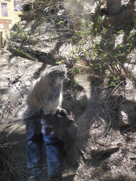 063 Cheyenne Zoo